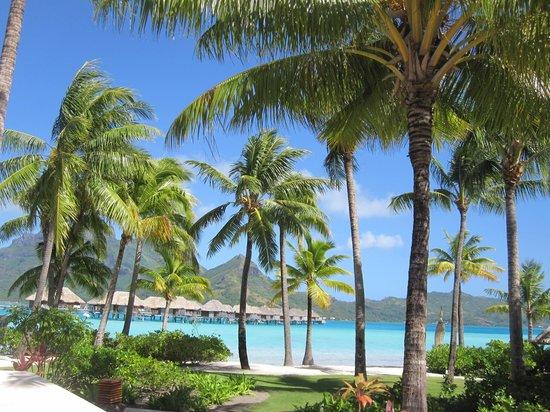 Four Seasons Resort Bora Bora: Grounds