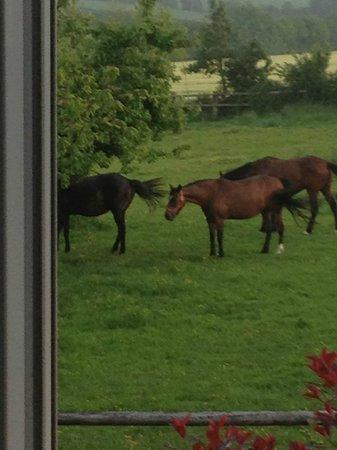 La Ferme du Pressoir : Horses on the farm