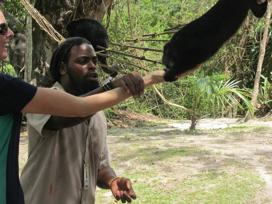 NCQ Belize Adventure Tours : feeding howler monkey