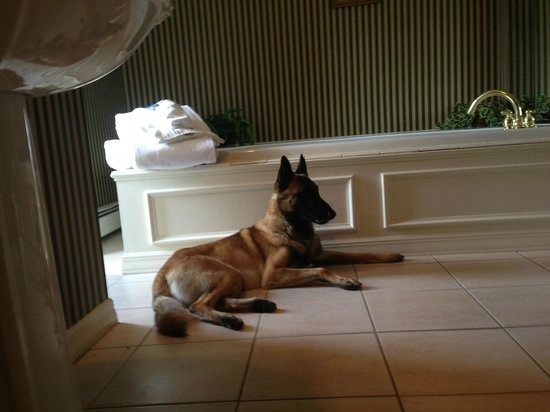 The Waynebrook Inn: Our Belgian Malinois in front of the jacuzzi