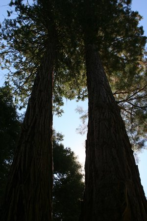 Mountain Top Bed & Breakfast: Typical Sequoia Grove