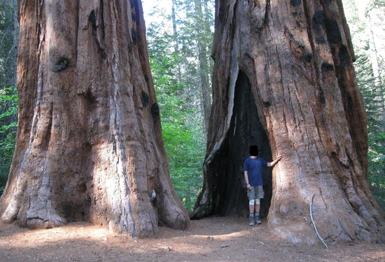 Merced Grove Yosemite National Park All You Need To