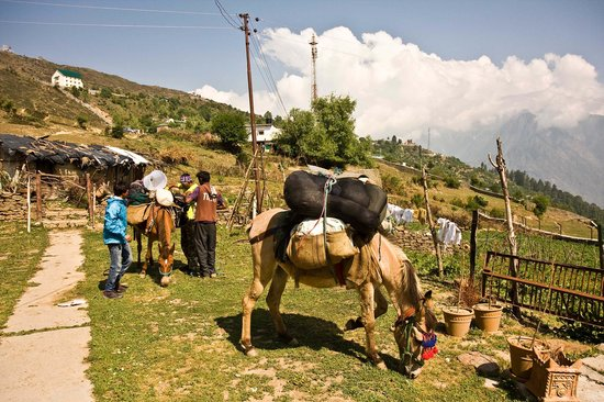 Devi Darshan Lodge : Mules getting readied with camping equipment