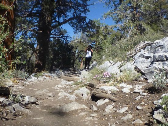 Holcomb Valley Tour: One of the first markers leads you down this scenic trail