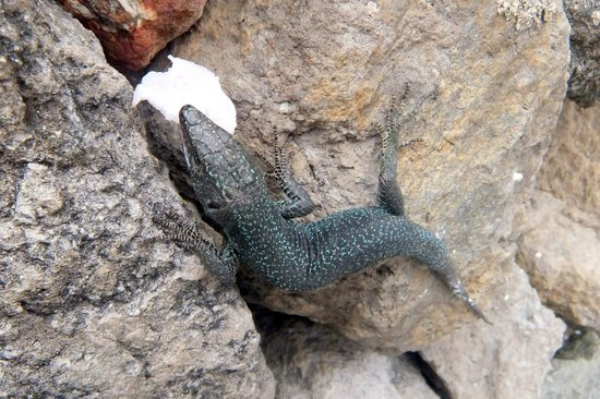 Quinta do Mar: The garden lizards are very tame