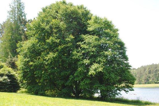 Bernheim Arboretum & Forest: Beautiful Forest