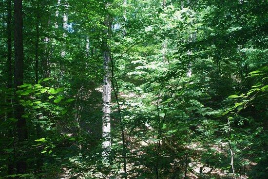 Bernheim Arboretum & Forest: Beautiful scenery