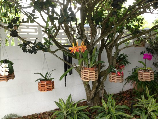 The Beachcomber: Orchids near the office
