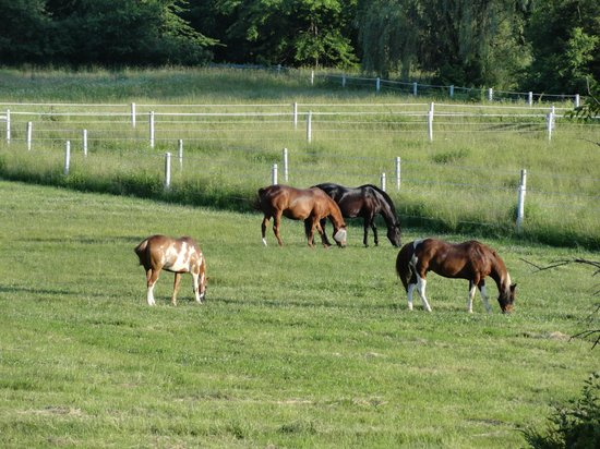 The Inn at Westwynd Farm: The horses are out every evening.