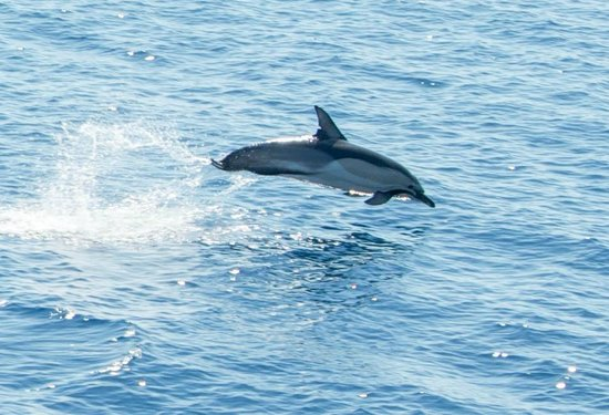 Boudouriani House: Dolphin seen on Island Hopper Trip