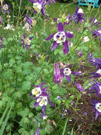 Schreiner's Iris Gardens: display garden