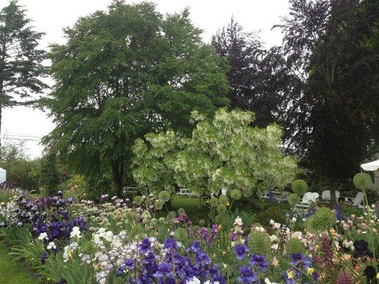 Schreiner's Iris Gardens: fringe tree