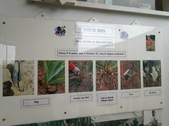 Schreiner's Iris Gardens: iris instructions