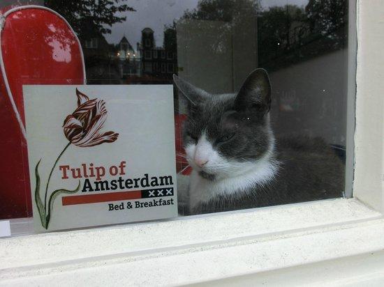 Tulip of Amsterdam B&B: Hauskater Loytje