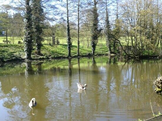 Corby, UK: duck pond