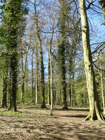 East Carlton Country Park: woods