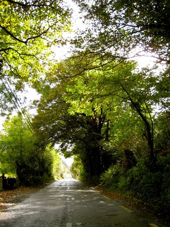 Old Kenmare Road: That canopy of trees