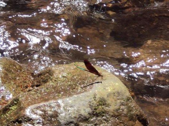 Yufu River Valley : 初めて見たトンボです
