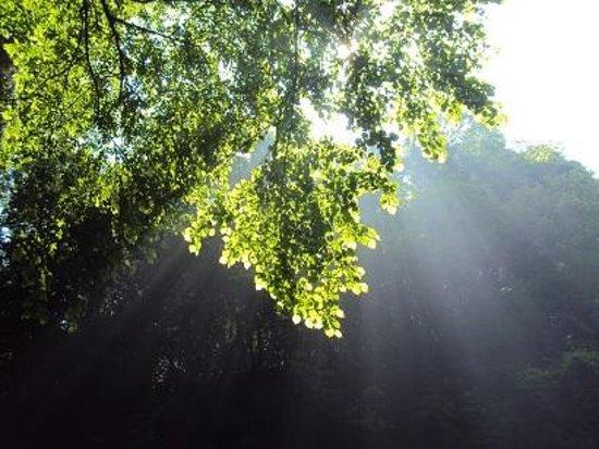 Yufu River Valley : 木漏れ日もさわやかです