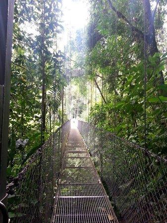 Arenal Adventures: Hanging bridges