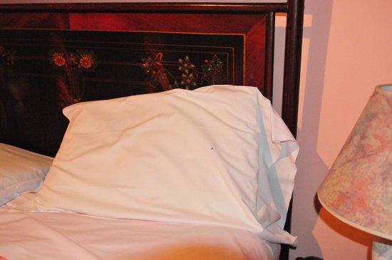 Riverbank Hostel Tintori: Bed Bugs