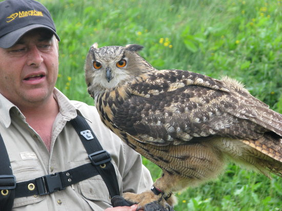 Phoenix Falconry : Adrian & his Eagle Owl