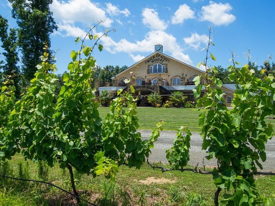 Hurdle Mills, NC: Standing in the vineyard and looking at winery building