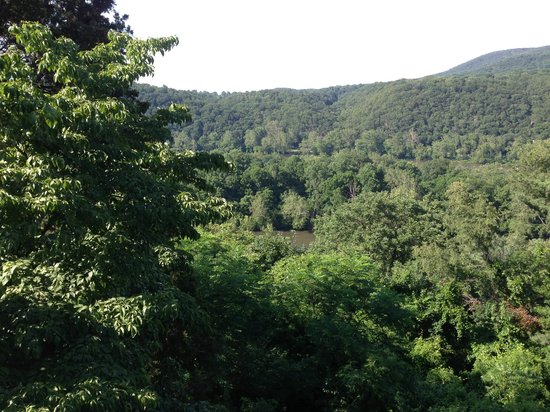 Laurel Lodge: View from the deck