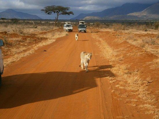 Bamburi Beach Hotel: On Safari