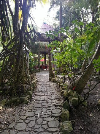Maruba Resort Jungle Spa: Maruba Grounds towards lobby/dining area