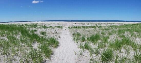 Crane Beach: Dunes