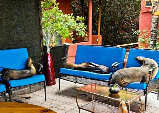 Red Mangrove Ecoluxury Hotel : Cheeky sea lions