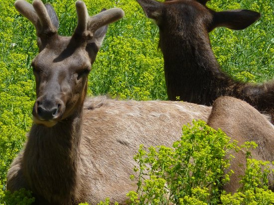Gaylord's City Elk Park: Resting in the sun.  Undisturbed by visitors.
