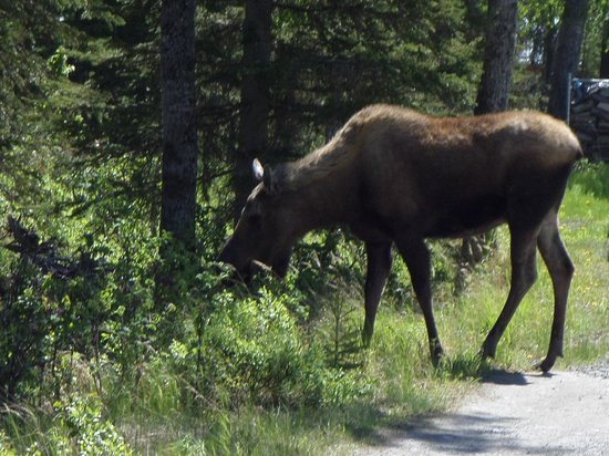 Russell Fishing Company: moose