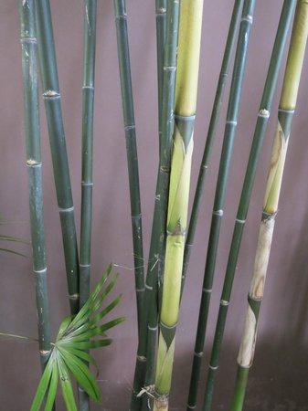 Siripanna Villa Resort & Spa: The bamboo garden
