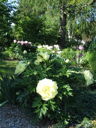 Century House Bed and Breakfast: Beautiful Gardens