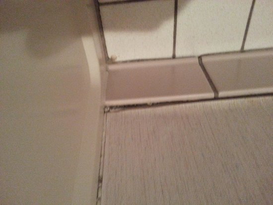 Baymont Inn & Suites Cortez: More Mold Rm,#118