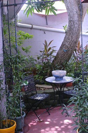 Coqui del Mar Guest House: A quiet place for coffee or conversation under the mango tree.
