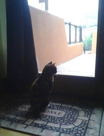 Casa Grande Inn: Our cat enjoys the view