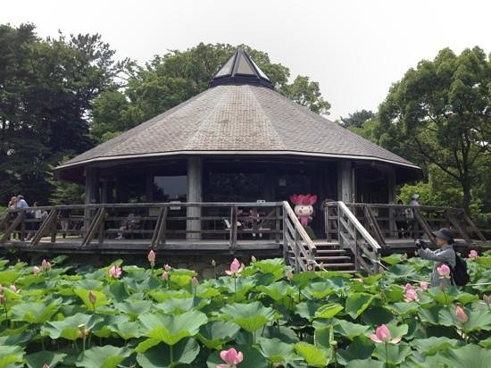 Chiba Park: June 15 - July 7