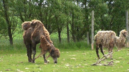 gamle bryster zoo Sjælland