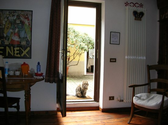 Nabuisson B&B : Looking from the room to the courtyard and one of the cats.