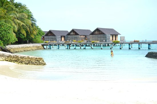 Gangehi Island Resort: beach front