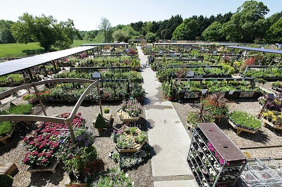 Thetford Garden Centre: Outside Plant Area