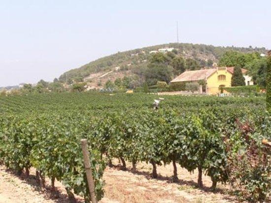 The Lancashire Wine School - Day Classes: World of Wine