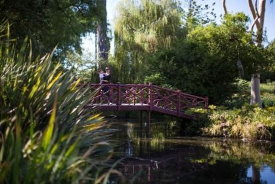 Rippon lea house gardens various ponds picture of for Garden pond melbourne
