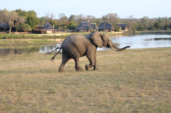 Simbambili Game Lodge: Elephant