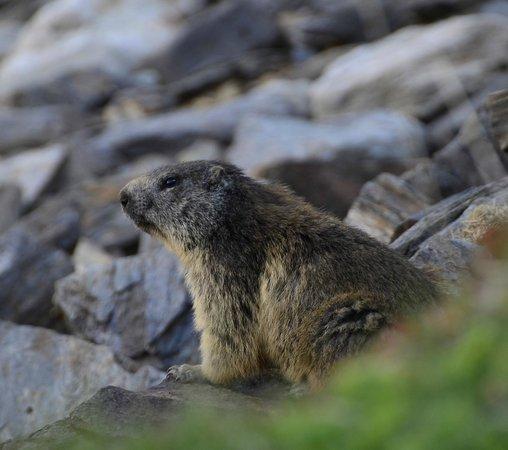 Diesen Bewohner trifft man oft am lago Ritom.