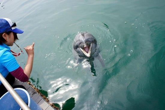 Iki Iruka Park: イルカのご飯タイム