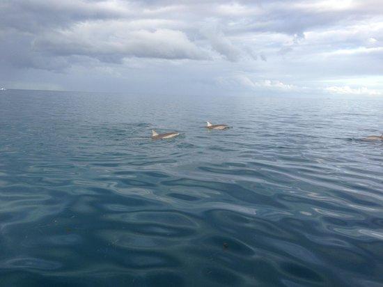 Dolswim: Spinner Dolphins